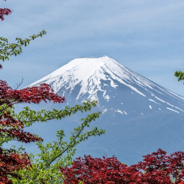 Mt Fuji bordered by trees