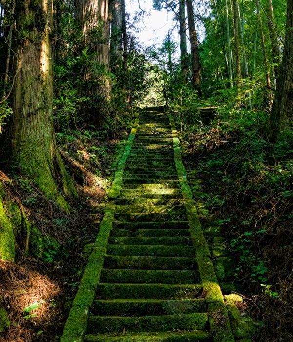 Stairs overgrown with green moss