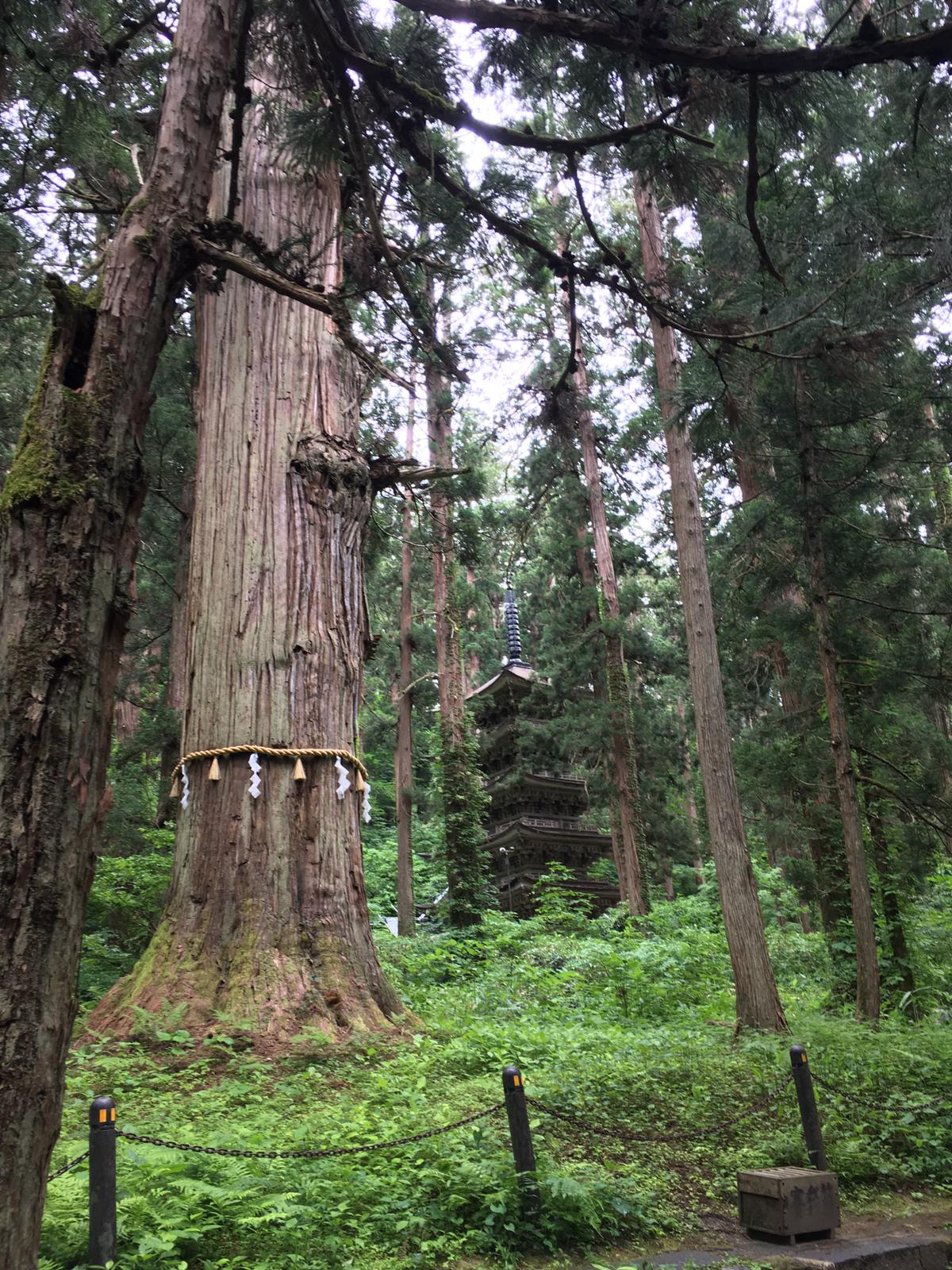 Tree and pagoda