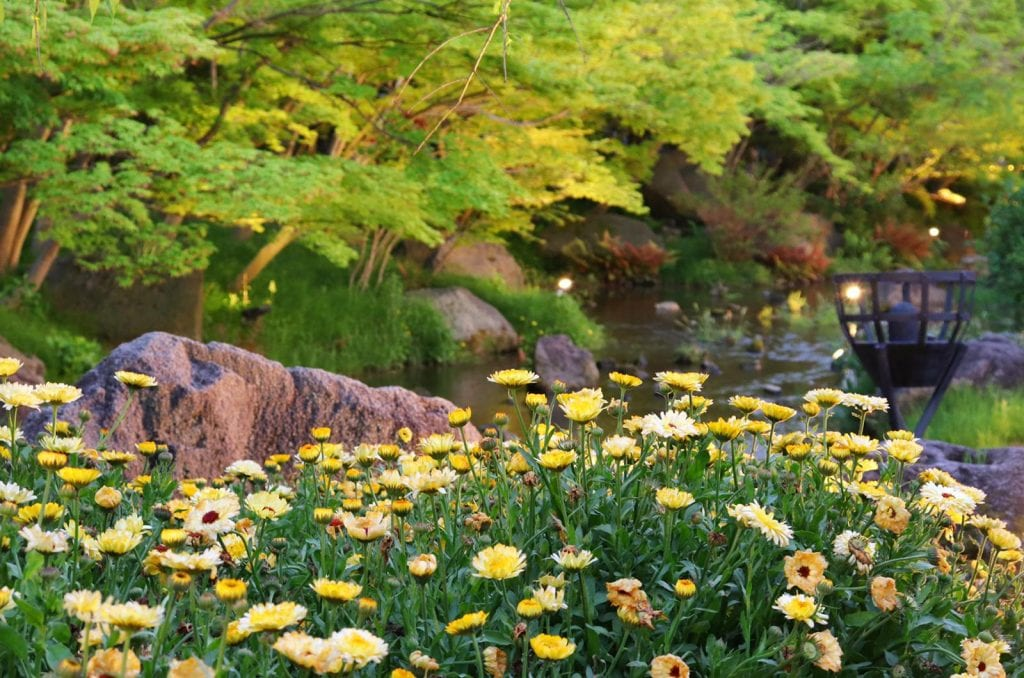 Yellow flowers in front of a pond in a park