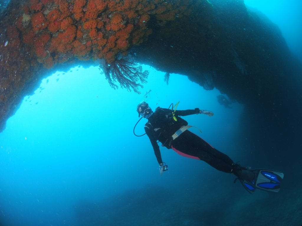 Scuba diving under coral arch