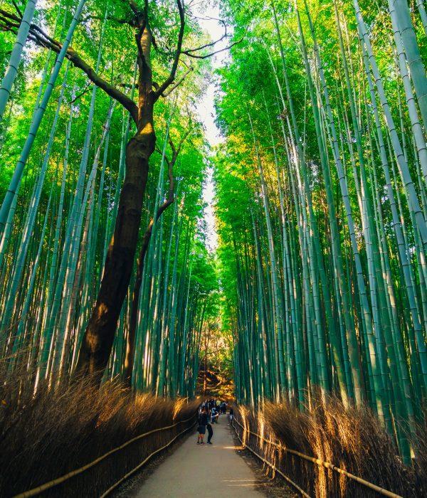 Bamboo walkway in Arashiyama in Kyoto.